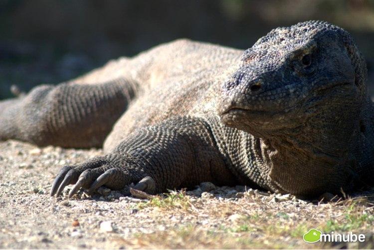 29.) Komodo National Park, Indonesia