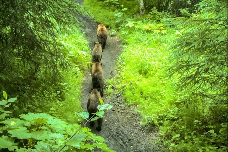 24 - 25 Most Treacherous Hiking Trails in the World - Rover's Run Trail, Alaska