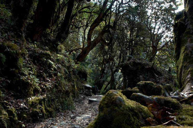 1) Haunted Forest in Altadena - hikes in california