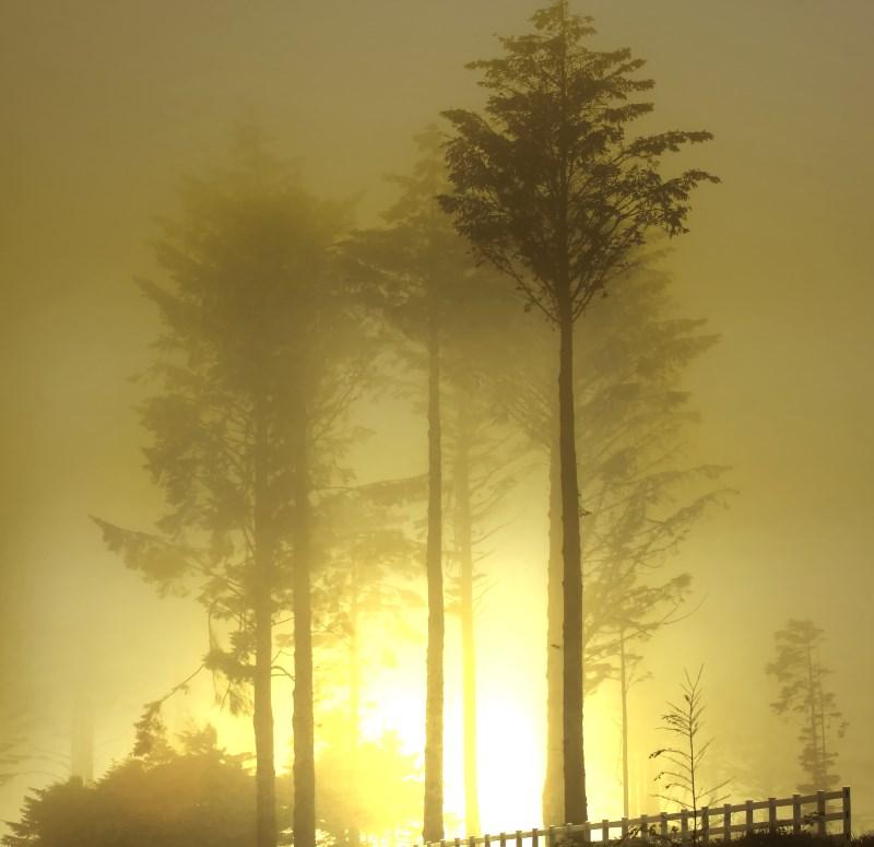8) Wynoochee - haunted hiking trails in Washington