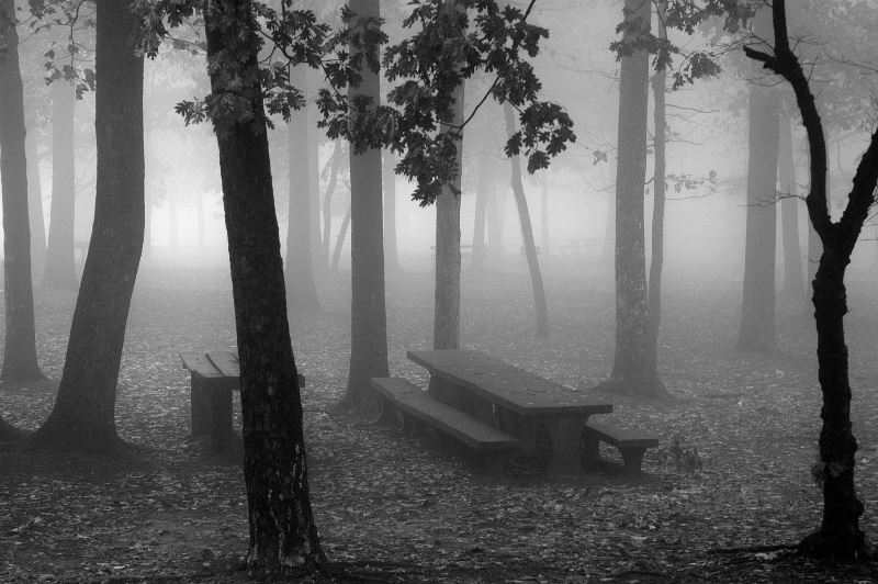 7 - DeForest Park - Haunted Forests in California