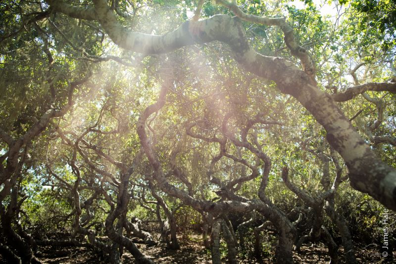9 - San Marcos Elfin Forest - Haunted Forests in California