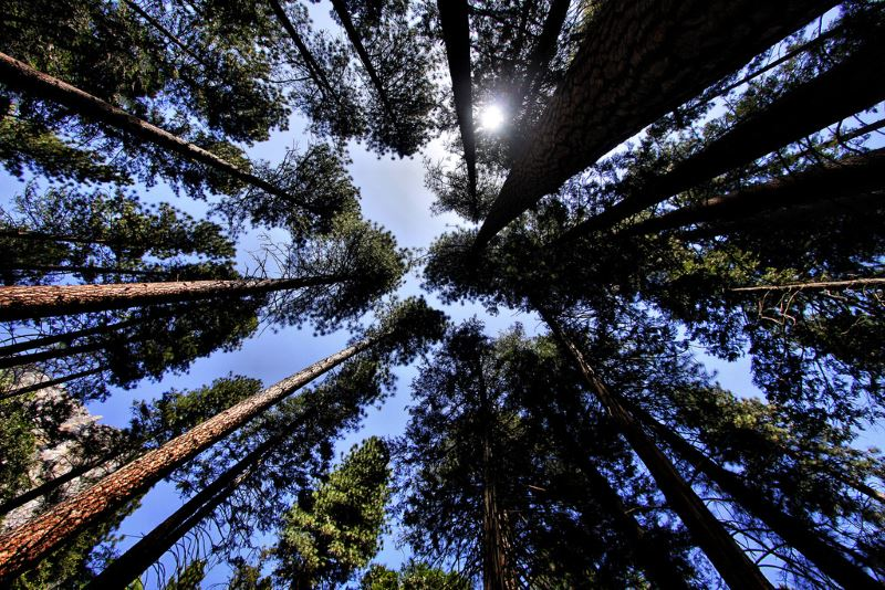 10 - California Pines - Haunted Forests in California