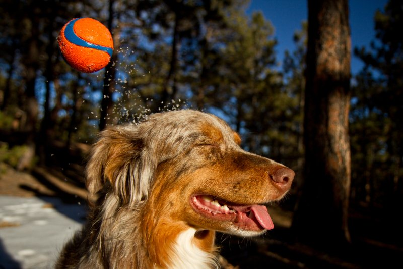 Boing - 50 Heartwarming Pictures Of The Silliest Dogs To Ever Go Hiking