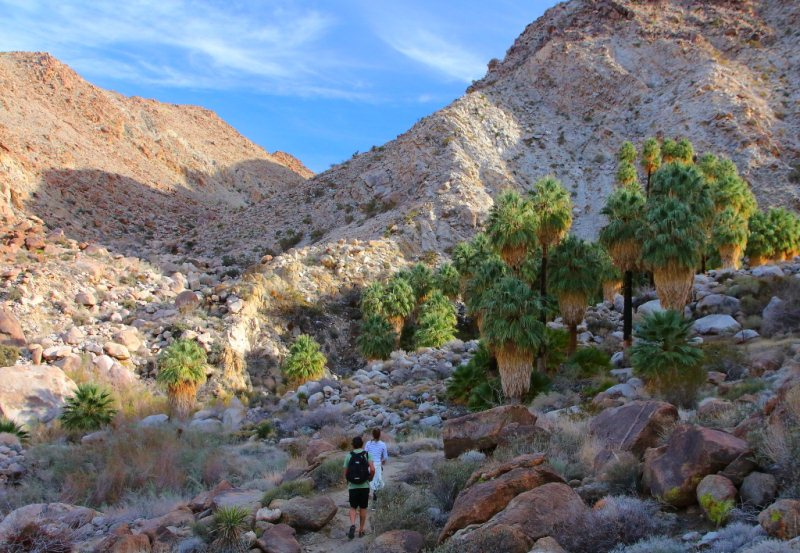 4 - Lost Palms Oasis - 10 Best Hidden Hikes In California