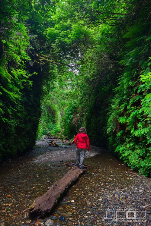 10 - Fern Canyon - 10 Best Hidden Hikes In California