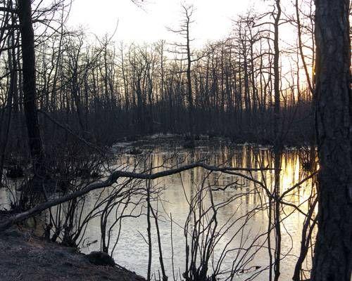 30) New Jersey - Batona Trail New Jersey Pinelands - Haunted Hiking Trails 50 States