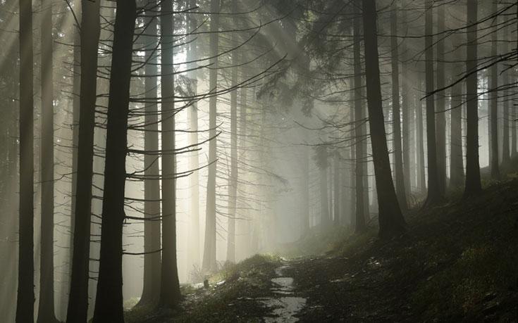 46) Virginia - Appalachian Trail Appalachian Trail - Haunted Hiking Trails 50 States