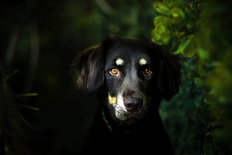 dog acting strange - haunted house signs