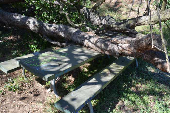 Haunted Picnic Table #29