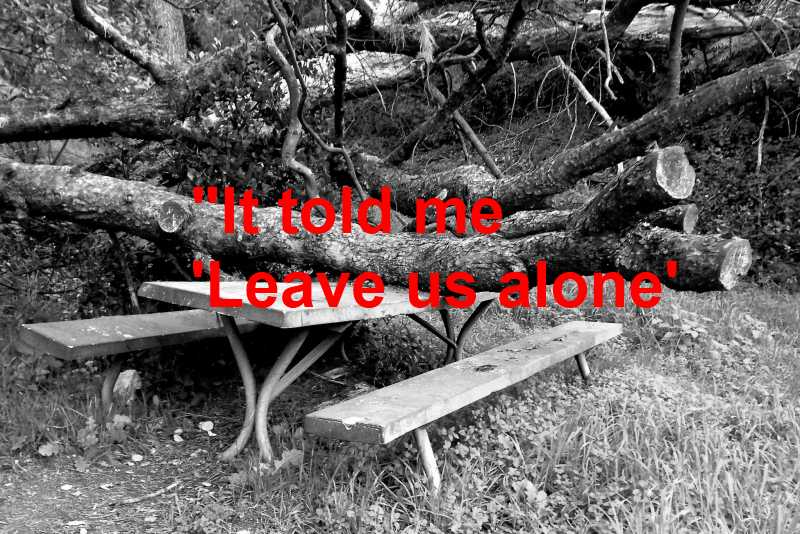 Griffith Park Haunted Picnic Table Black White