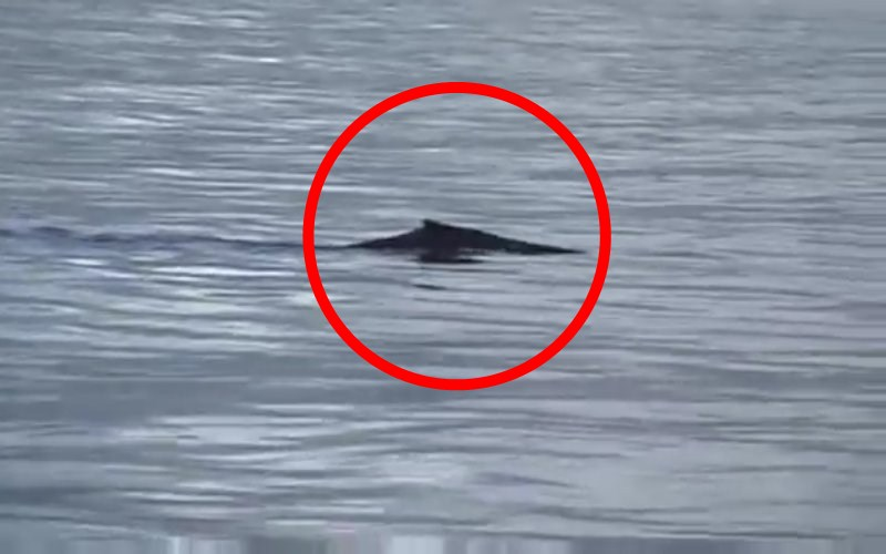 Is this real footage of the Loch Ness Monster