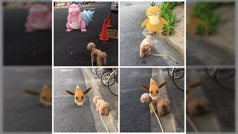 Pets seem to be able to somehow tap into the energy created by Pokemon from Pokemon Go