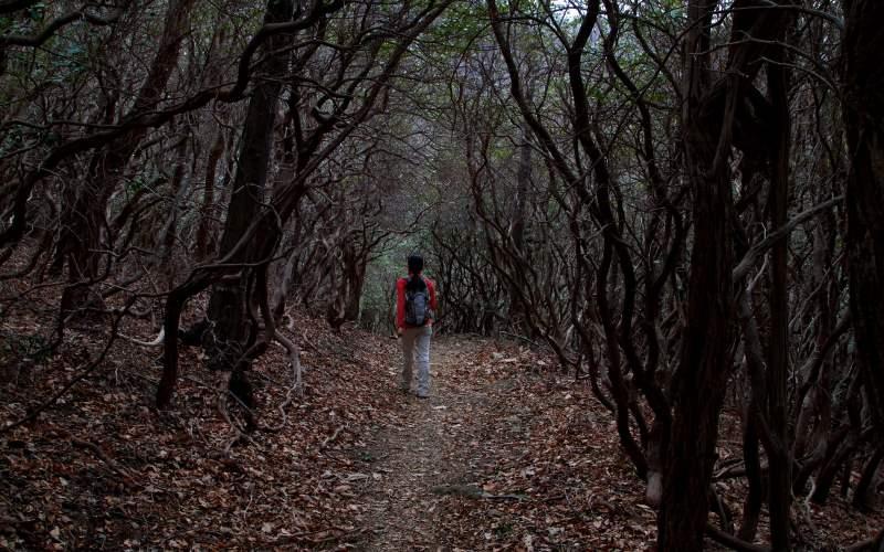Bloody-Ghost-Terrifies-Hiker-in-Woods-ftr