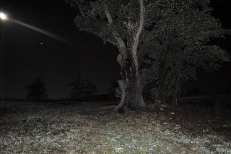 The New Jersey Devil Tree is linked to a rumor about Bernards Township having been the headquarters for the New Jersey branch of the Ku Klux Klan