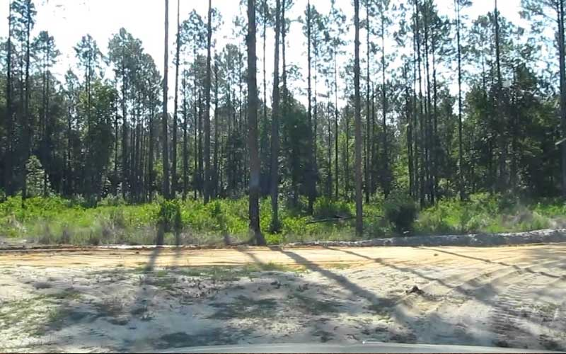 Belmore State Forest in Florida is the sole reason that people call Starke haunted.