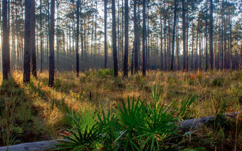 It's kind of a known thing that Blackwater River State Forest in Florida is a haunted place. It's kind of a meeting place for the paranormal of the region.