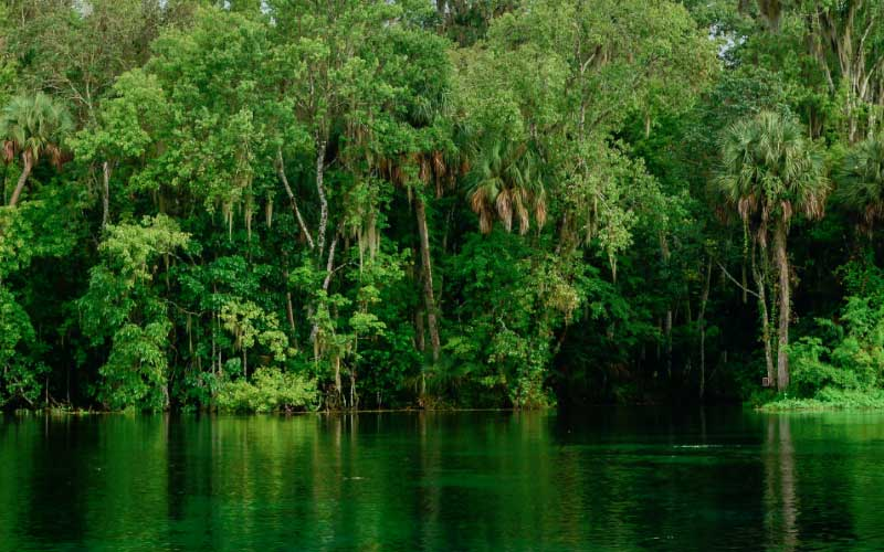 The Ocala National Forest in Florida is known as a very haunted place, and not just because of the restless spirits.