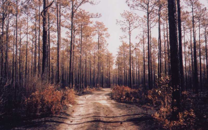 Some say the Apalachicola National Forest in Bristol, Florida, aren't safe for the paranormally sensitive. Some say it's perfect safe. Who are you going to believe?