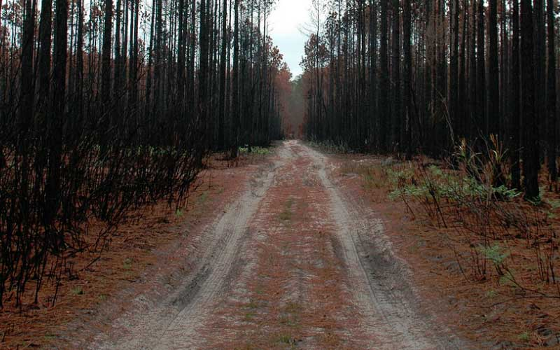 Lake City, Florida: Home to Osceola National Forest, for better or worse.