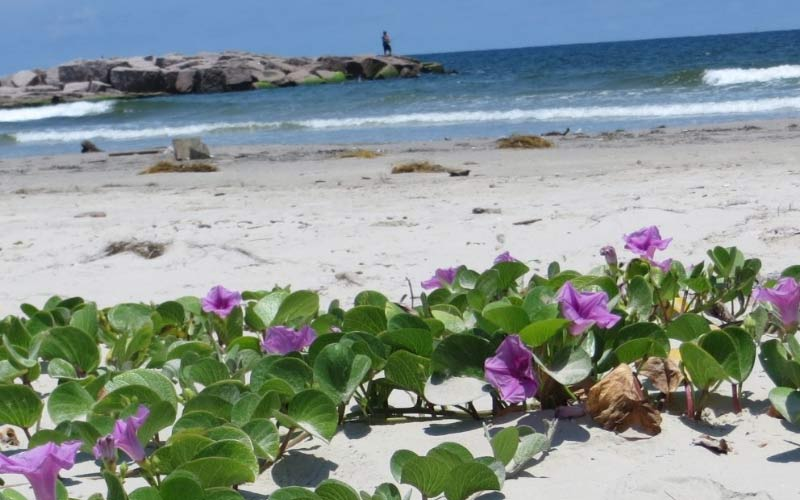 Mustang Island in Port Aransas, Texas. Don't let the pretty flowers fool you...