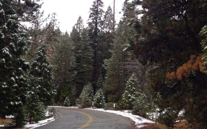 Sequoia National Forest is a treasure of Porterville, and a treasure to those who study the paranormal.
