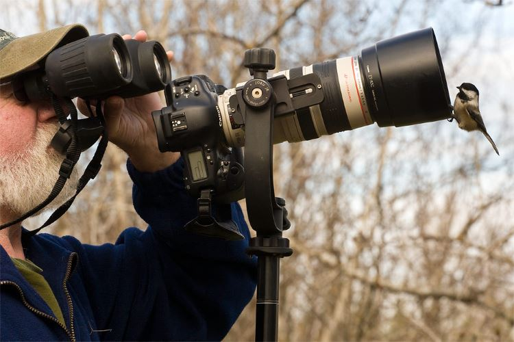 3 Best DSLR Cameras for Wildlife Photography [Read Before Buying]