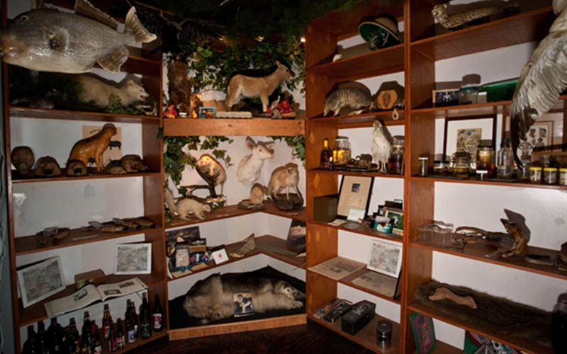 There's a room dedicated to a large collection of taxidermy.