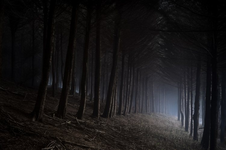 these-10-genuinely-haunted-forests-in-california-will-terrify-you