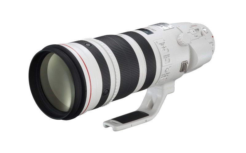 8 Best Dslr Camera Lenses For Wildlife Photography Amazing Results