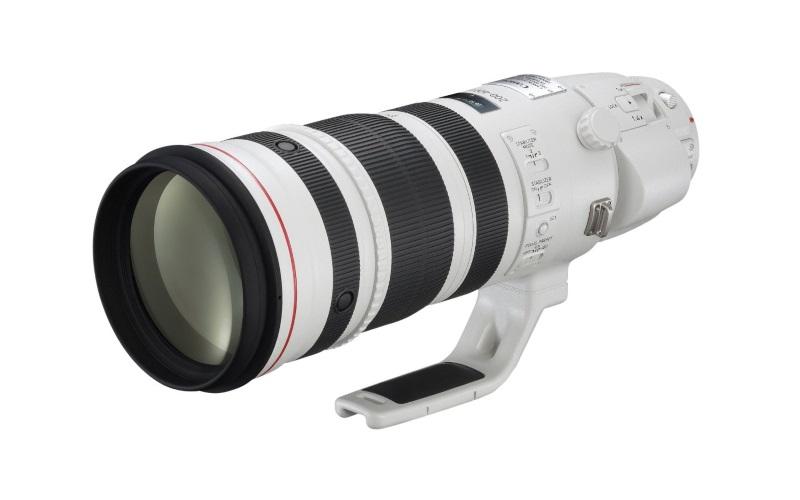 Best DSLR Camera Lenses for Wildlife Photography
