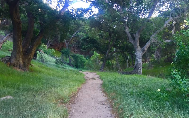 Take a rapid journey down the viper trail but don't forget to breathe or you'll never leave this Santa Clarita, California bike trail.