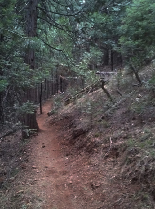 Arnold's Rim Trail at Stanislaus National Forest in California is absolutely one of the most terrifying places in the entire state, especially if you're biking alone.