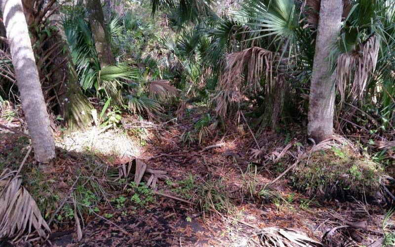 The trails at Rock Spring Run in Sorrento Florida will surely terrify even the most brave.