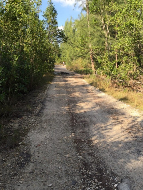 Gilligan's Island Trail is aptly named, because you may get stuck somewhere and never find your way home from this Oleta River State Park North trail in Miami Beach, Florida.