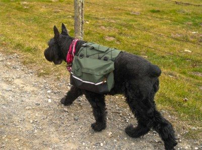 Hiking Accessories For Dogs
