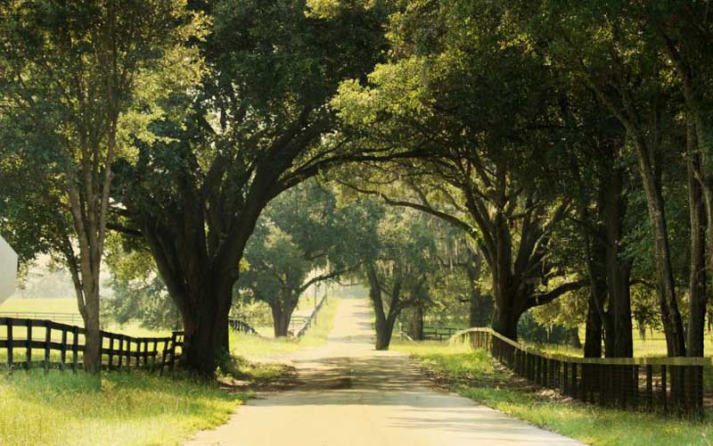 Rolling Acres Road in Lady Lake, Florida