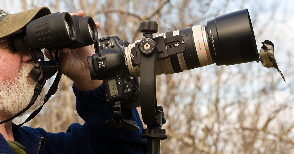 3 Best Dslr Cameras For Wildlife Photography Read Before
