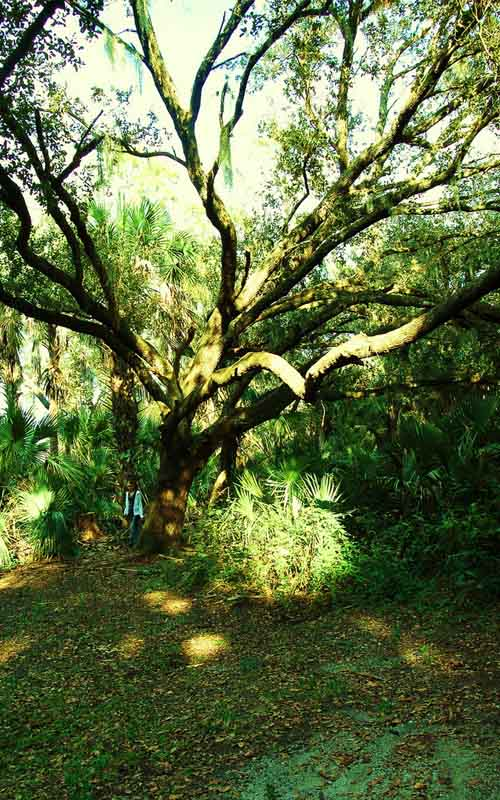8 Of The Most Famous Creepy Urban Legends In Florida